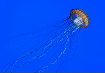 Le cose da fare e da non fare quando si è stati attaccato da una medusa
